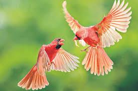 นิทานอีสปที่เกี่ยวกับคาสิโน เรื่อง  การประกวดนกสวยงาม